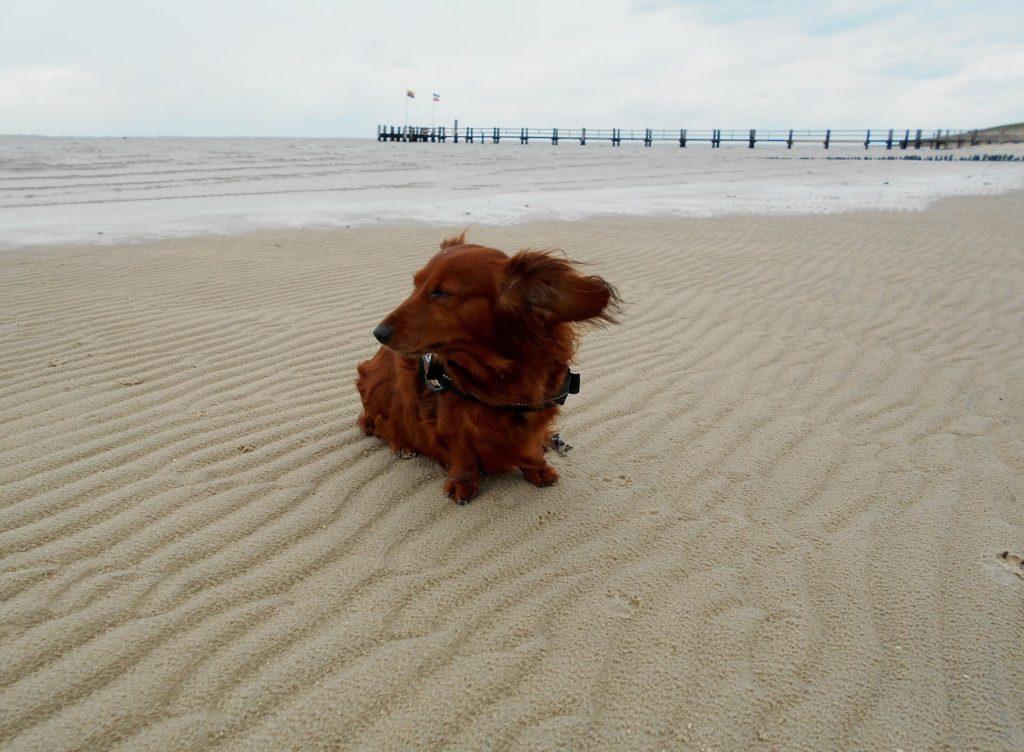 Lucy vom Winde verweht - Föhr, Strand, Nähe Wyk