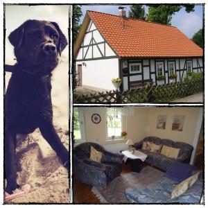 urlaub mit hund im naturpark harz im ferienhaus breiler. Black Bedroom Furniture Sets. Home Design Ideas