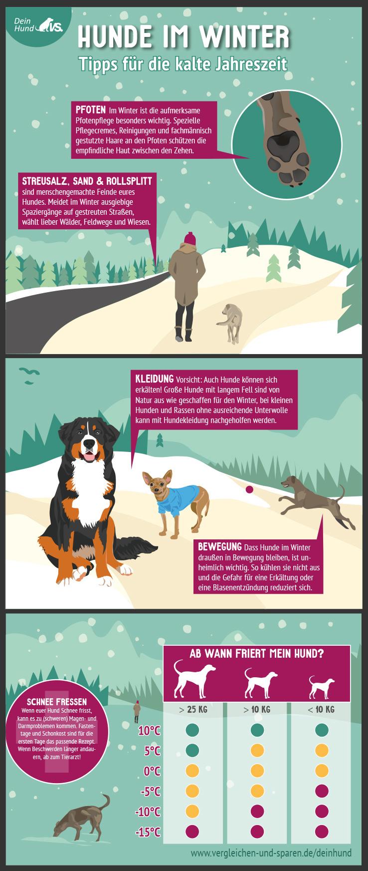 infografik hunde im winter wann friert mein hund wirklich urlaub mit hund im winter. Black Bedroom Furniture Sets. Home Design Ideas