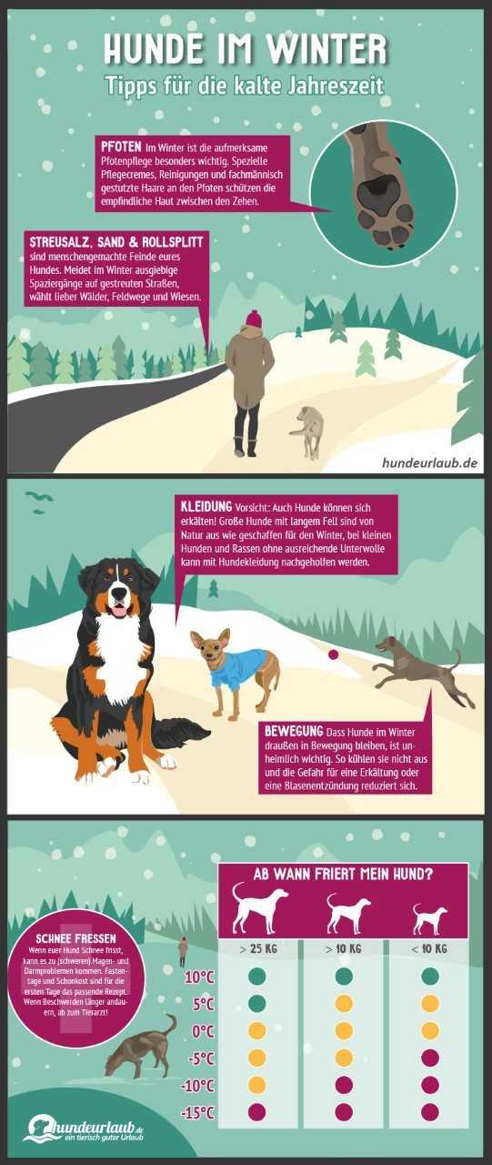 Infografik Hunde im Winter