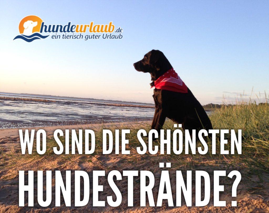Hundestrände Nord- und Ostsee