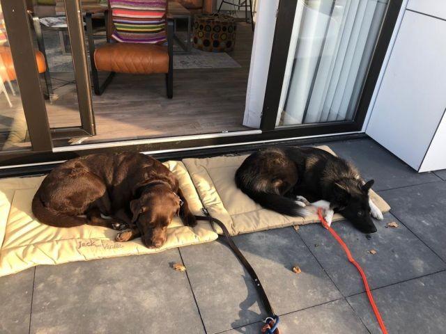 Hunde am Ferienhaus Beachhouse B66