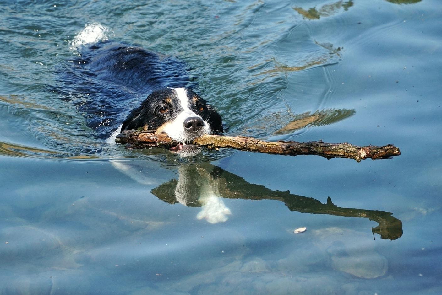 Wasservergiftung bei Hunden