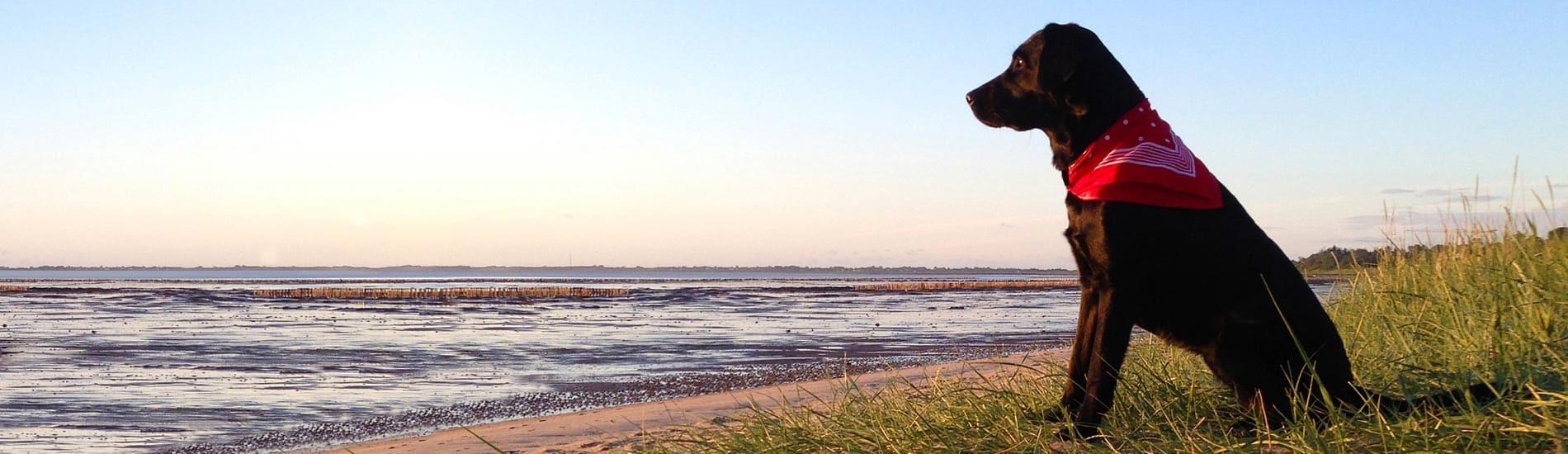 Urlaub Mit Hund An Der Ostsee In Ferienwohnung Ferienhaus
