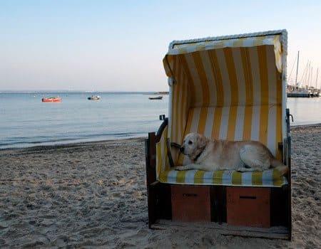 Urlaub mit hund auf den ostfriesischen inseln reiseinfos for Urlaub mit hund auf juist