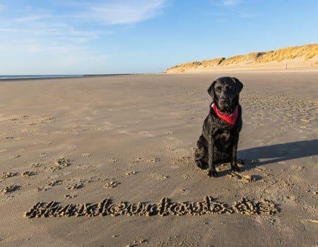 Strand Karte Zeeland.Reisefuhrer Zeeland Mit Hund Tipps Und Infos