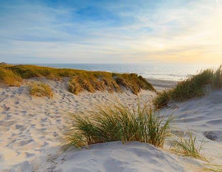 Strand Karte Zeeland.Die Schonsten Hundestrande In Zeeland Hier Tipps Und Infos
